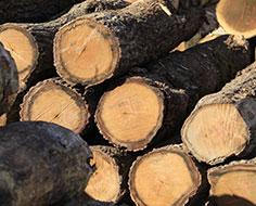 LOG 原木について